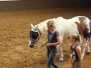 Native Horses Training